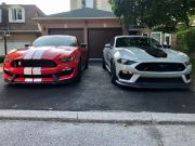 ford_mustang_mach_1_vs_shelby_gt350